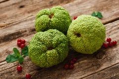 绿色哇洒琪橘用在木头的荚莲属的植物莓果 免版税图库摄影