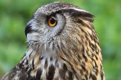 黑色图画老鹰例证墨水猫头鹰向量 免版税图库摄影
