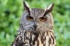 黑色图画老鹰例证墨水猫头鹰向量 免版税库存照片