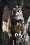 黑色图画老鹰例证墨水猫头鹰向量 图库摄影