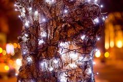 绿色圣诞节冷杉木 免版税库存图片