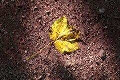 黄色在地板上的色的秋天叶子 免版税库存图片