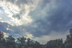绿色在天空的树顶面线 免版税库存图片