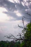 绿色在天空的树顶面线 免版税图库摄影