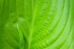 绿色在春天 库存图片
