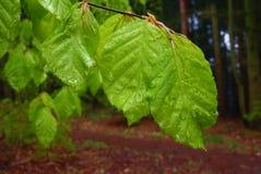 绿色在森林把特写镜头留在雨天 免版税库存图片