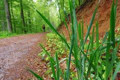 绿色在森林把特写镜头留在雨天 免版税库存照片