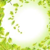 绿色在白色留给框架被隔绝 10 eps 库存照片