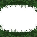 绿色在白色背景的叶子和植物框架 免版税库存照片