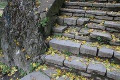 黄色在石台阶的下落的叶子 免版税库存图片