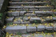 黄色在石台阶的下落的叶子 库存图片