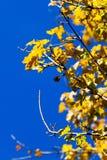 秋天黄色 库存照片