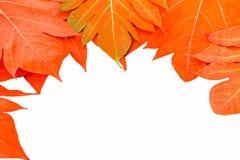 黄色在背景葡萄酒留下秋天叶子 免版税图库摄影