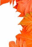 黄色在背景葡萄酒留下秋天叶子 免版税库存照片