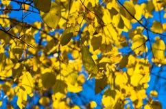 黄色在蓝天背景离开秋天在贝尔格莱德 库存图片