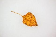 黄色在雪的下落的叶子 图库摄影