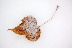 黄色在雪的下落的叶子 免版税库存图片
