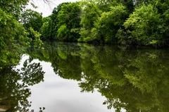 绿色在水中 库存照片