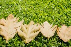黄色在绿草背景留下秋天叶子 免版税库存图片