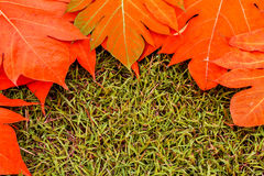 黄色在绿草背景葡萄酒留下秋天叶子 库存图片