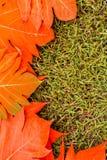 黄色在绿草背景葡萄酒留下秋天叶子 免版税库存图片