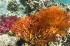 黄色在Lipe海岛的被打结的爱好者 免版税库存图片