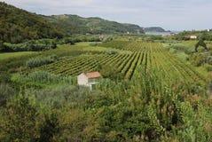 绿色地中海风景,皮兰,斯洛文尼亚 图库摄影