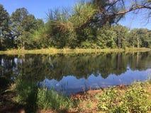 绿色地方池塘 免版税库存照片