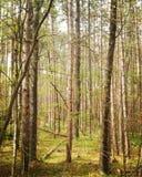 绿色地毯在森林里 免版税图库摄影