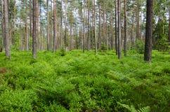 绿色地面在一个明亮的森林里 免版税图库摄影
