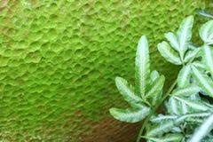 绿色坑表面地衣纹理  免版税库存图片