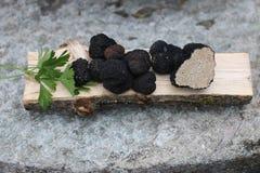 黑色块菌 免版税库存照片