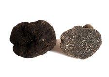 黑色块菌 免版税库存图片