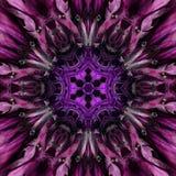 紫色坛场花中心 同心万花筒设计 免版税库存照片