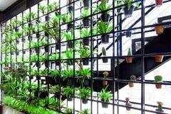 绿色垂直的庭院 庭院有许多垂悬在钢制框架的绿色植物 它可能节省能量和减少污染 可以是 库存照片