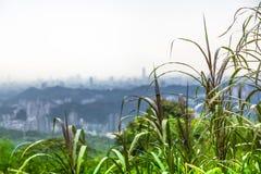 绿色城市视图 库存图片