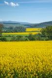 黄色域油菜籽 库存照片