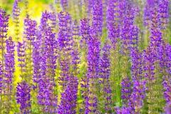 紫色域 免版税库存图片