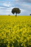 黄色域 免版税图库摄影