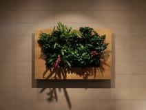 绿色墙壁, eco友好的垂直的庭院,墙壁种植装饰 库存照片
