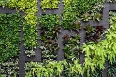 绿色墙壁, eco友好的垂直的庭院 免版税库存照片