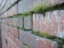绿色墙壁 图库摄影