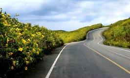 黄色墨西哥向日葵杂草 库存图片