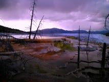 紫色声势浩大的春天 免版税库存图片