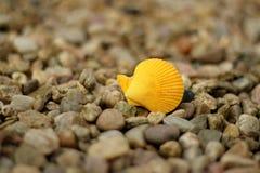 黄色壳 免版税图库摄影