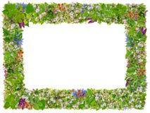 绿色复活节和平照片框架 库存照片