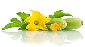 绿色夏南瓜和它的花 免版税库存图片