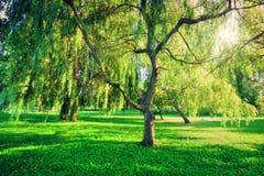 绿色夏天公园风景 本质主题 库存图片
