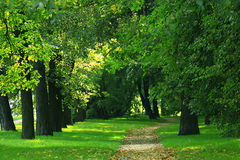 绿色夏天在城市公园 库存图片