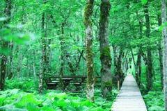 绿色夏天在城市公园 免版税图库摄影
